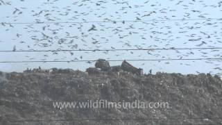 Largest garbage dump in north India - Ghazipur