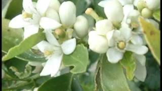 Dos gardenias para ti (version larga) REMIX