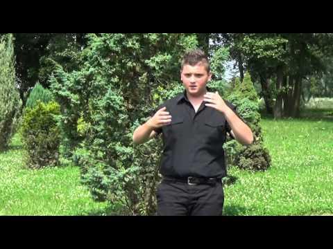 Sateliti - Facebook 2 - (Official video 2014)