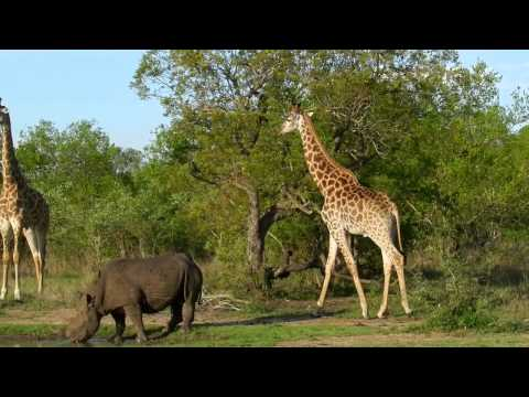 Mad River Media- Ed Dooley- South Africa/Swaziland- Personal videos w/point & shoot camera
