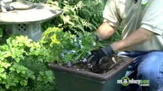 June Gardening Tips - Summer Care of Annuals