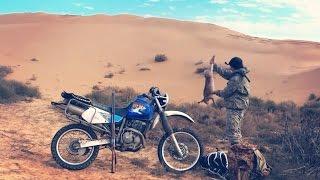 Охота на зайца в пустыне. Охота на мотоцикле. Иж-43