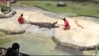 Не шутите с крокодилом