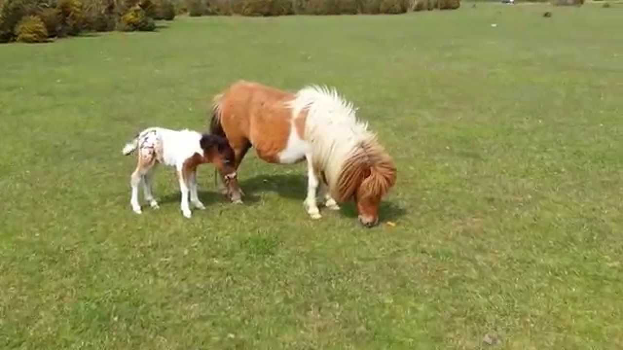 cutest my little pony no this is a real pony and it s new born