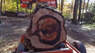 Big English Walnut