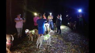 Educa Patte - Marche cani nocturne du 3 septembre 2021