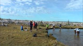 Trophic dynamics in Subarctic wetlands by Amanda Winegardner.mp4