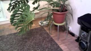 irobot roomba 520 Видео 3(Это видео загружено с телефона Android., 2010-11-04T22:13:19.000Z)