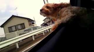 ドライブ大好き!気持ちよさそ~。。