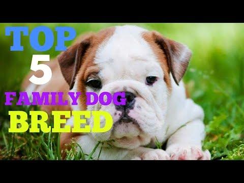 TOP 5 FAMILY DOG BREED |DOGGIESTRAINING