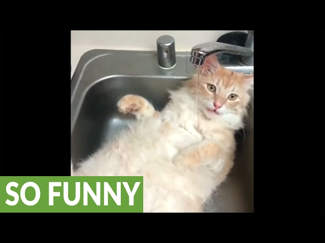 18947d43db 5 videos of cats that love water