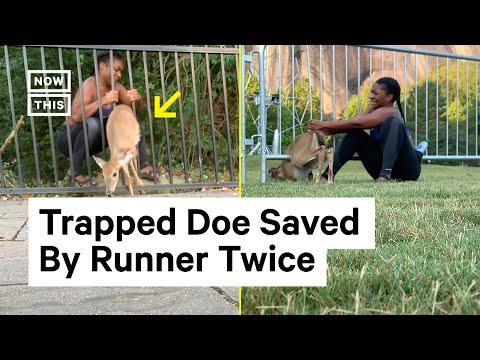 Runner Saves Deer Stuck in Fence Twice