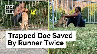 runner-saves-deer-stuck-in-fence-twice-nowthis