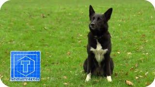 Der Hundetyp hilft einer Studentin | ToolTown