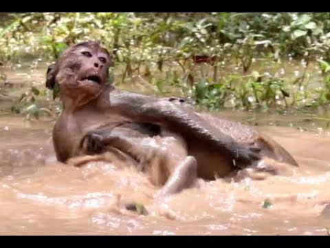 Baby cry baby nearly die cos fighting in water Angkor daily 997