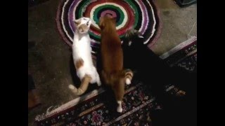 Бешеные кошки!