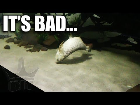Thumbnail: 2,000G AQUARIUM FREAK ACCIDENT