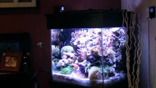 Walter's 60 Gallon Reef Aquarium
