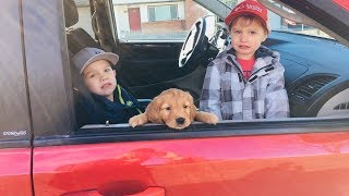 Kids Drive Parents Car to Town and Buy a Puppy! Just for Fun!