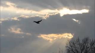 "Michael W. Smith - Step By Step / Forever We Will Sing (""Hallelujah!"") HQ"