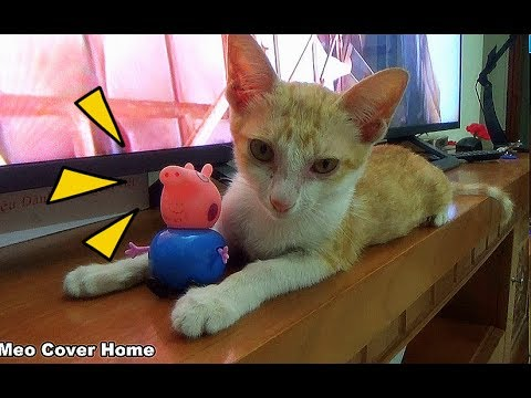 Cat See Peppa Pig In First Time So Funny  | Funny Cat Vines 2017 | Meo Cover Home