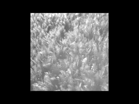 Paysage d''Hiver - Schnee IV