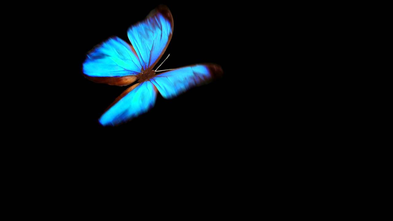 Simple Butterfly Animation