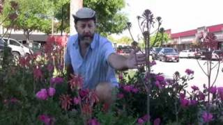 Roses in the South: Down & Dirty With Jim Martin