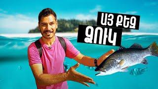 Միայն տեսեք ինչ ձուկ են վաճառում Աֆրիկայում։