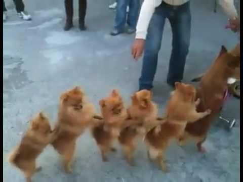 Les 7 chiens