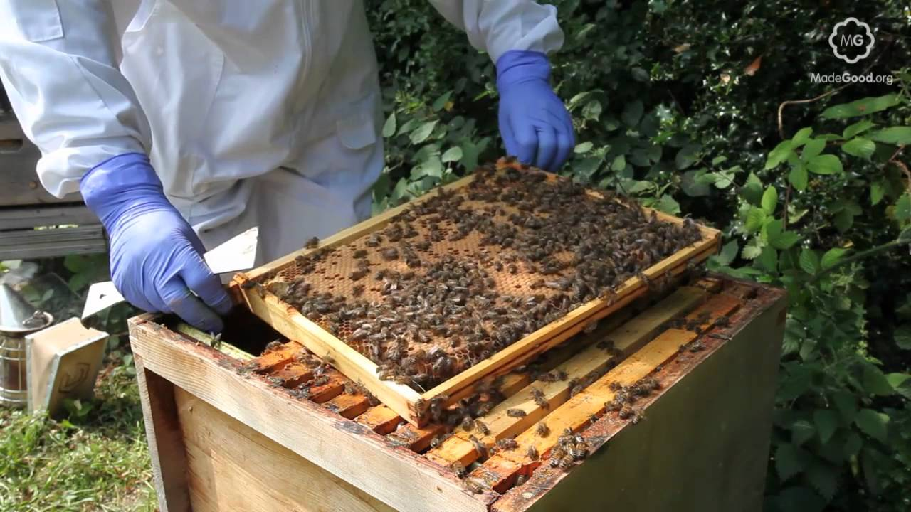 How to Inspect a Beehive recommendations