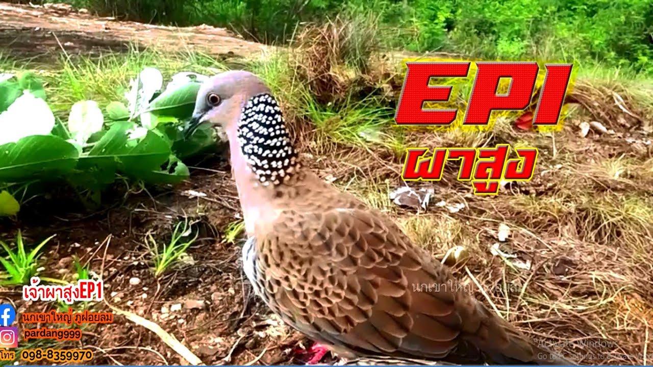นกต่อตัวใหม่กับเชลยตัวแรก【เจ้าผาสูงEP1】