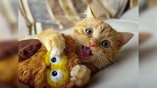 Смешные кошки и собаки июль 2019 Приколы с котами, смешные коты приколы 2019 funny cats animals #87