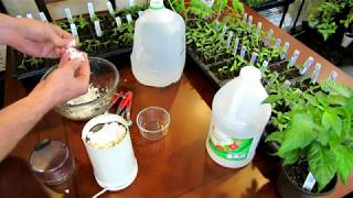 How to Make an Eggshell & Vinegar Fertilizer to Manage Blossom End Rot - Recipe & Use:  DIY Ep-2