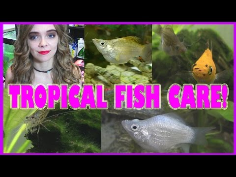 TROPICAL SMALL FISH CARE! (101 Everything you need to know!)