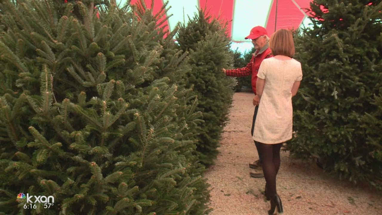 Christmas Tree Lots.Christmas Tree Shortage Could Mean Austin Tree Lots Sell Out Fast
