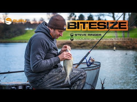 GURU BITESIZE: Commercial Silvers On The Feeder - Steve Ringer