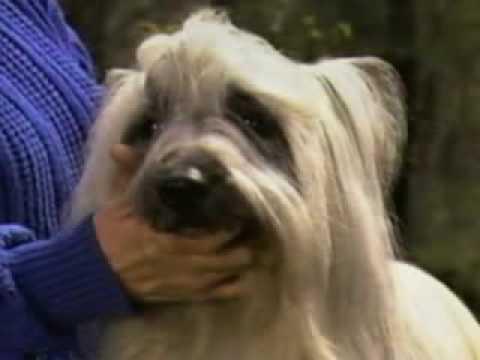 Skye Terrier part2