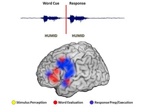 Tracking a Word Repitition Task in the Brain