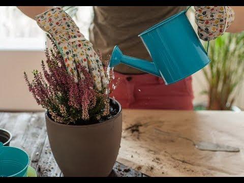 Чем подкормить КОМНАТНЫЕ РАСТЕНИЯ, не превращая цветочный горшок в помойку