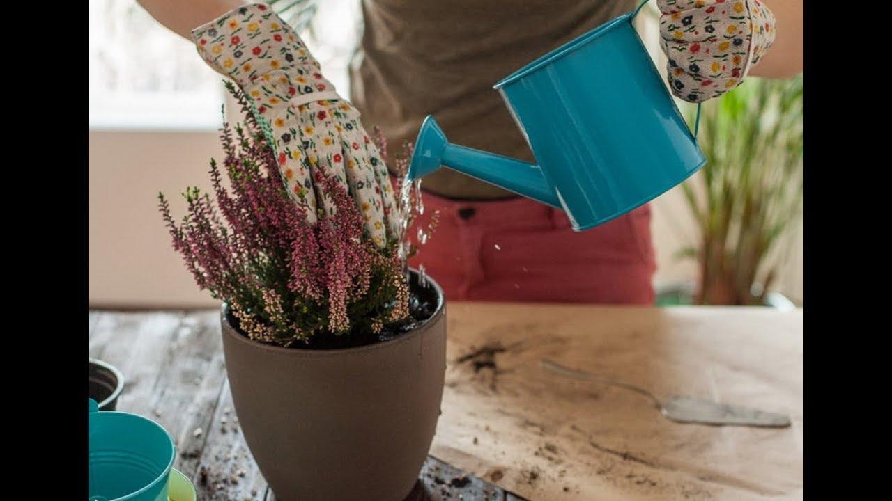 Как сделать квашеные баклажаны