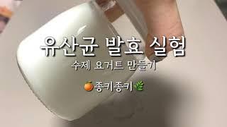 요거트 만들기/유산균 발효 실험 (how to make…