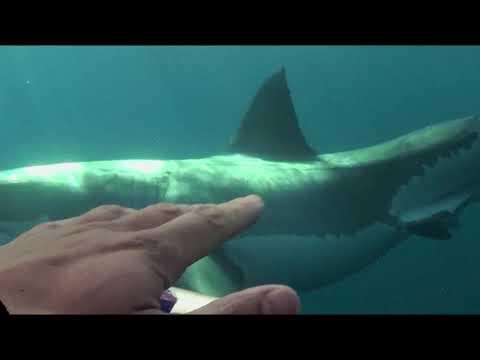 Над глубиной: Хроника выживания - Trailer