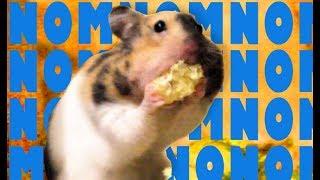 Hamster ... 🐹💖