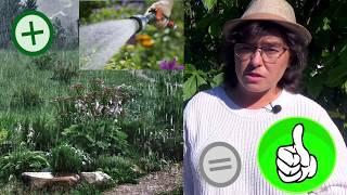 видео Дополнительное увлажнение в зимнем саду
