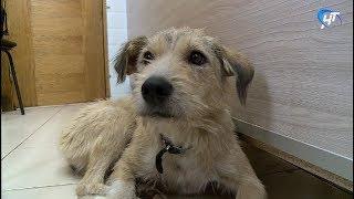 В Великом Новгороде увеличится пункт бесплатной стерилизации бездомных животных