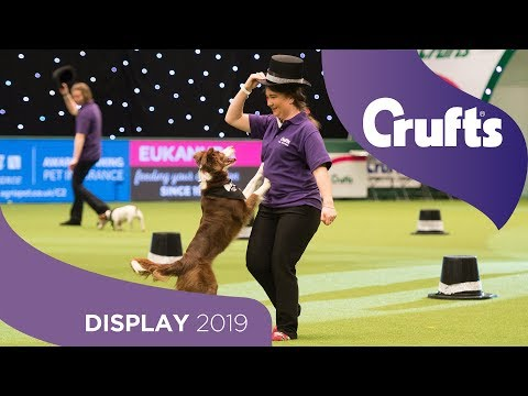 This is the Greatest Show! Dog Activities Display | Crufts 2019