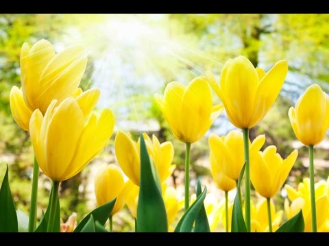 "Peaceful Music, Relaxing Music, Instrumental Music ""Morning Serenade"" by Tim Janis"