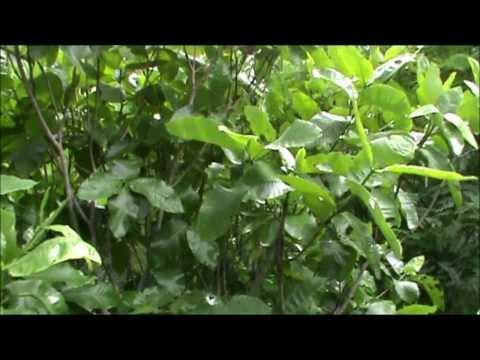 ethnomedicinal forest walk, India. Part 2