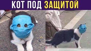 Приколы. Кот под защитой | Мемозг #188